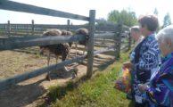 Экскурсия на ферму «Шартомский страус»